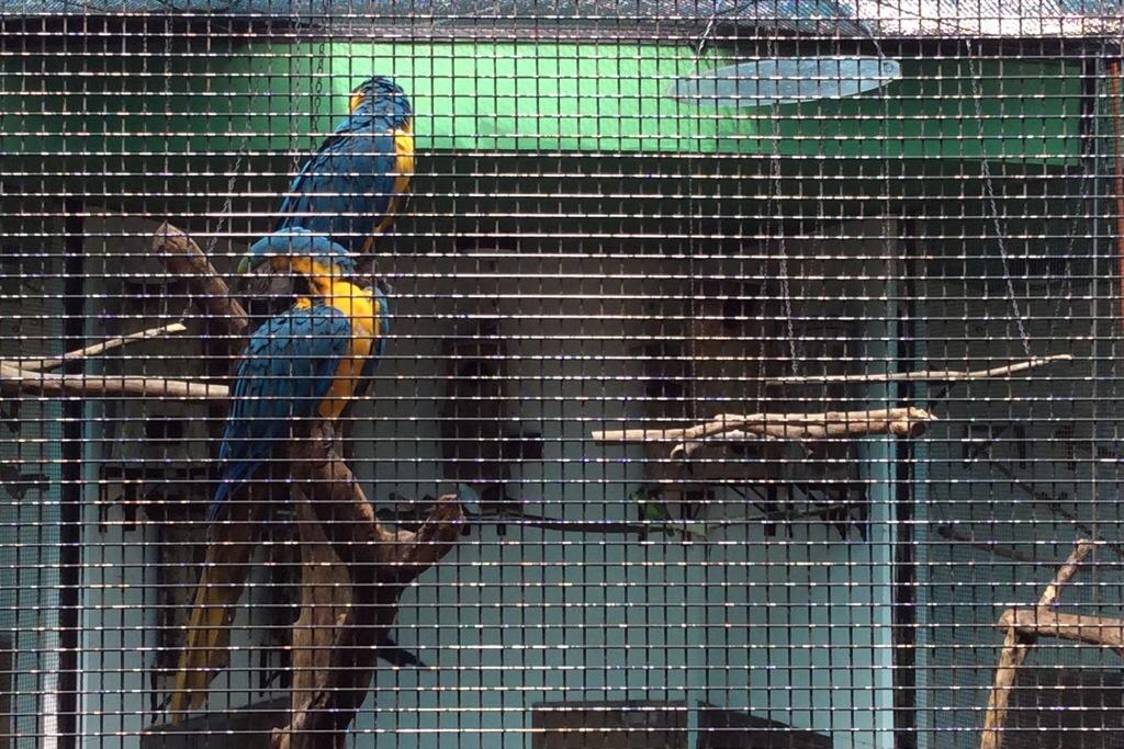 birds at Kowloon park