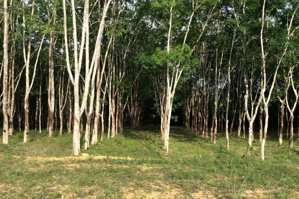 forest Langkawi