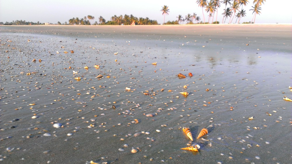 seashells Goa India