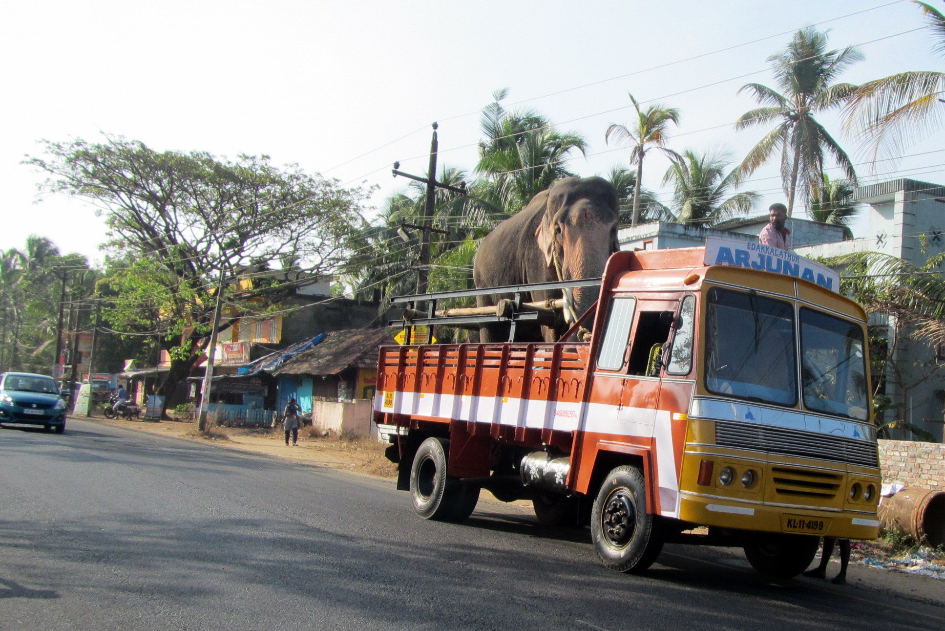 Elephant in a truck, India - What Is India Like?