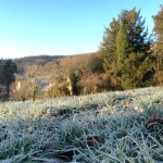 Winter in Burgundy, frost - France