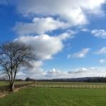Winter in Burgundy (4) - France