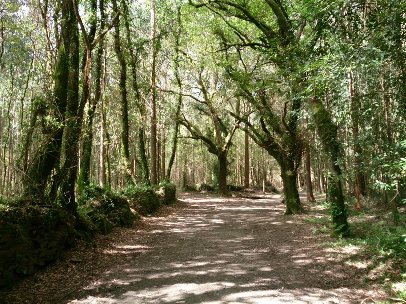 Fairy tale forest, Walking Camino de Santiago, Spain