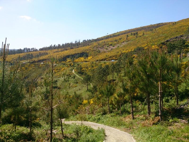 Going down the hill, towards Cee, Walking Camino de Santiago, Spain