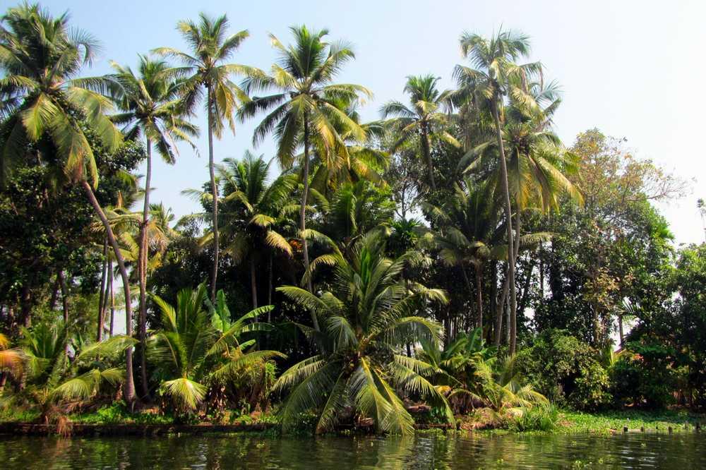 10 Kerala backwaters tour