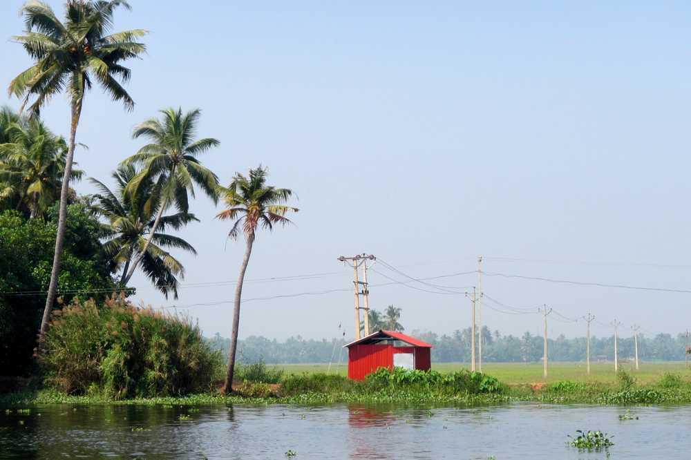 Fields in Kerala - Kerala backwaters tour
