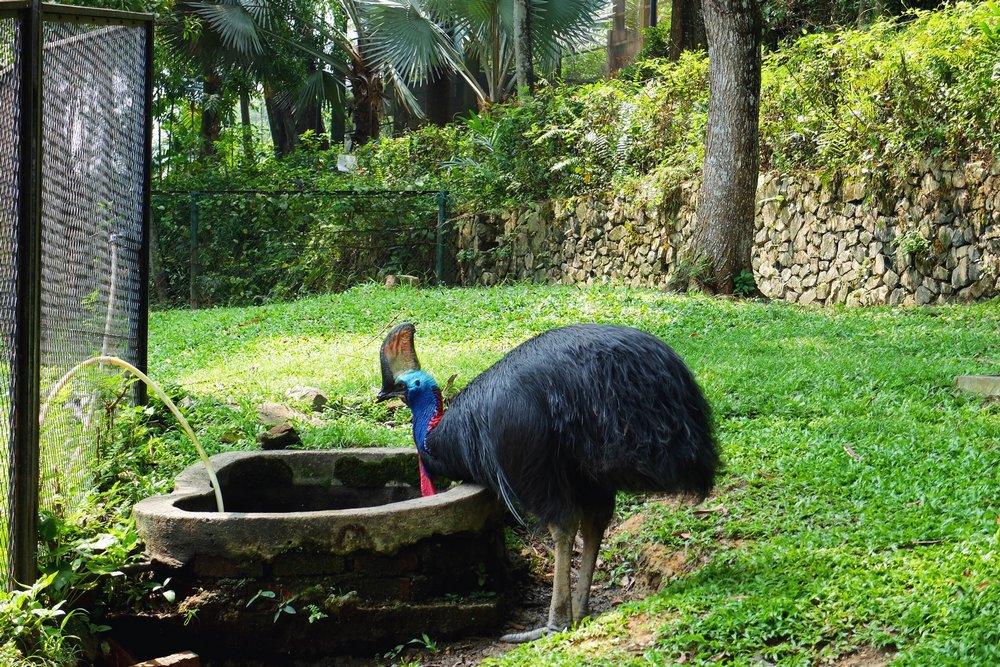 Bird in Kuala Lumpur Bird Park