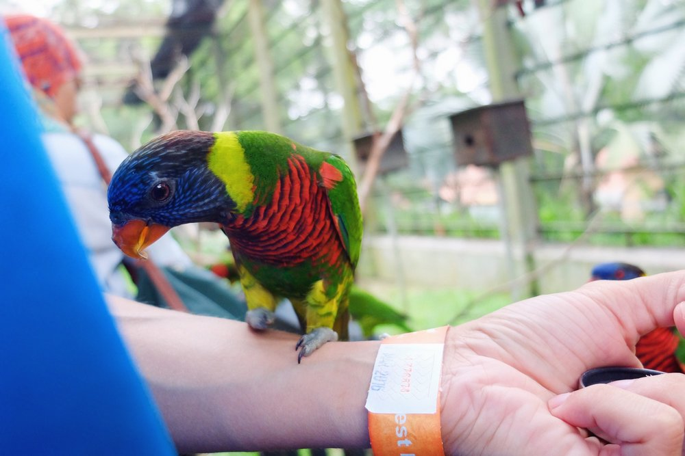 Colorful parrot in Kuala Lumpur bird park