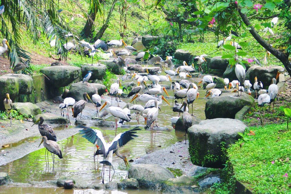 Many storks in Kuala Lumpur Bird park