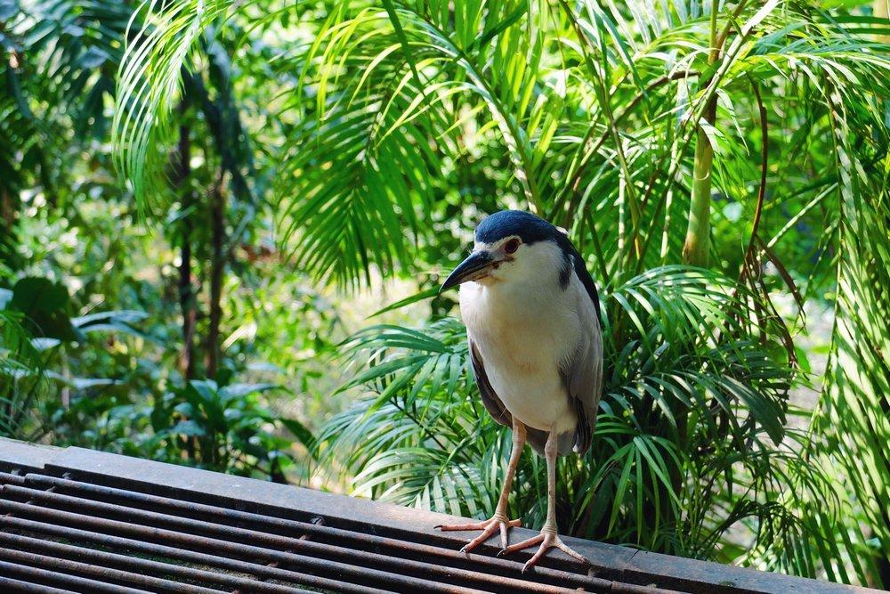 Small bird in Kuala Lumpur Bird Park