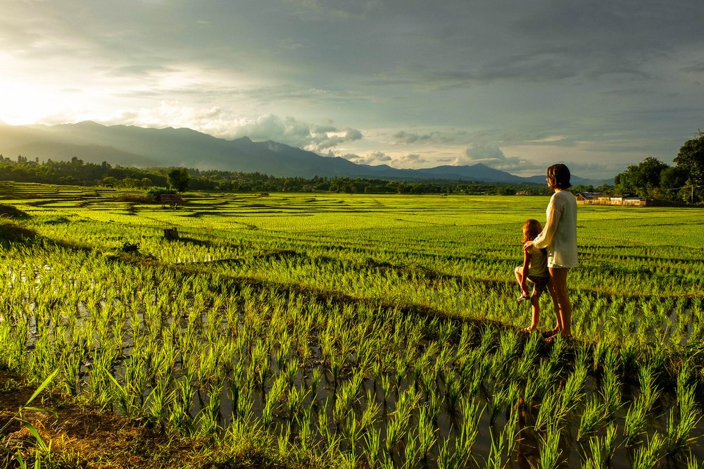 rice fields of Thailand - Gap Year Latvians