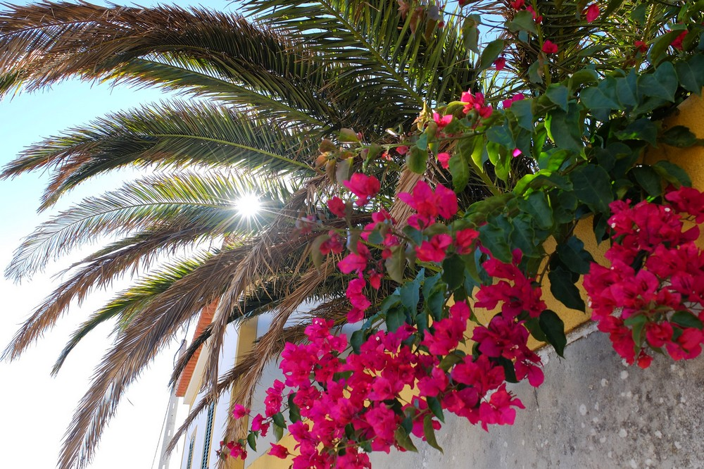 Palm tree and flowers in Obidos, Portugal
