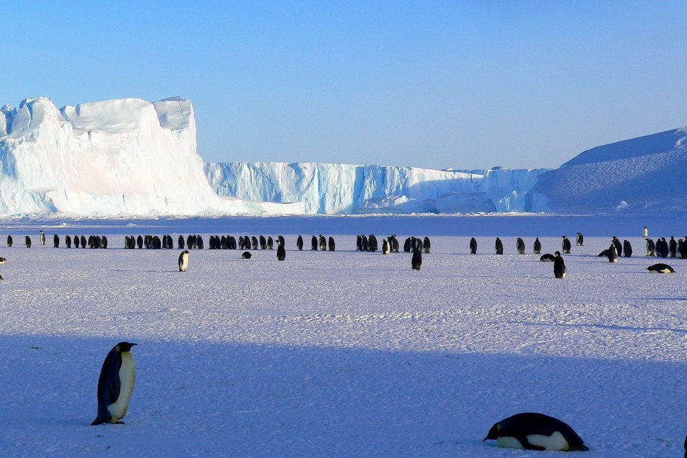 Emperor penguins - Why go to Antarctica