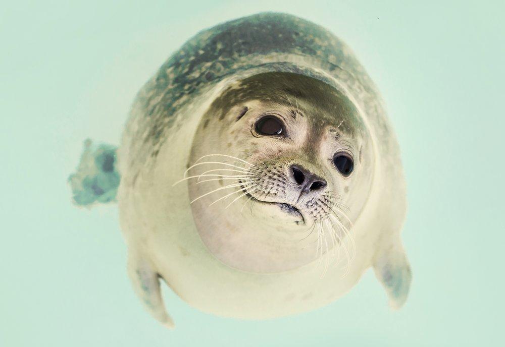 Seal in Antarctica - Why go to Antarctica