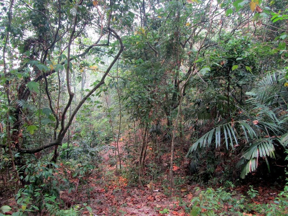 no more trail Kuala Lumpur