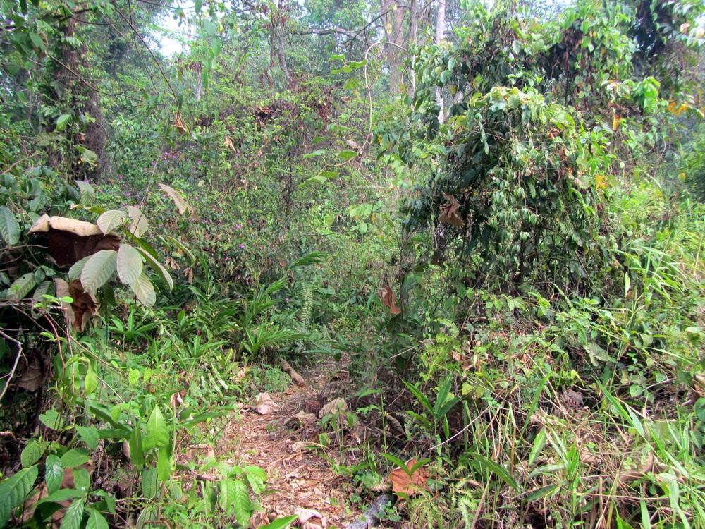 trail Kuala Lumpur
