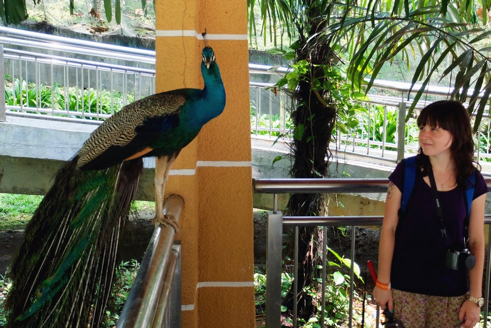 Una looking at a peacock - Kuala Lumpur Bird Park, Malaysia