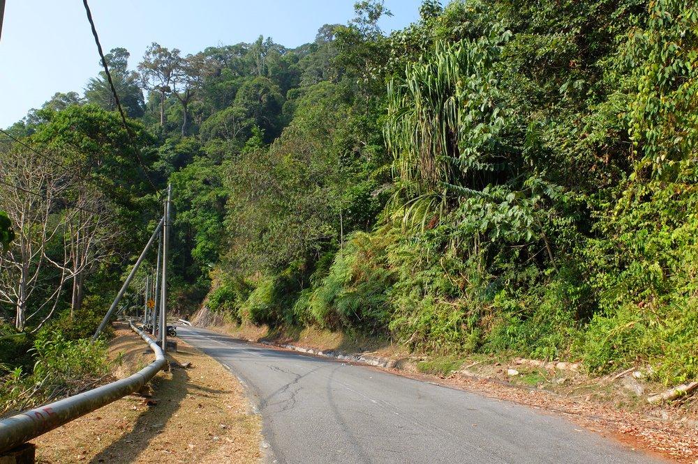 A road - Gunung Raya, Langkawi