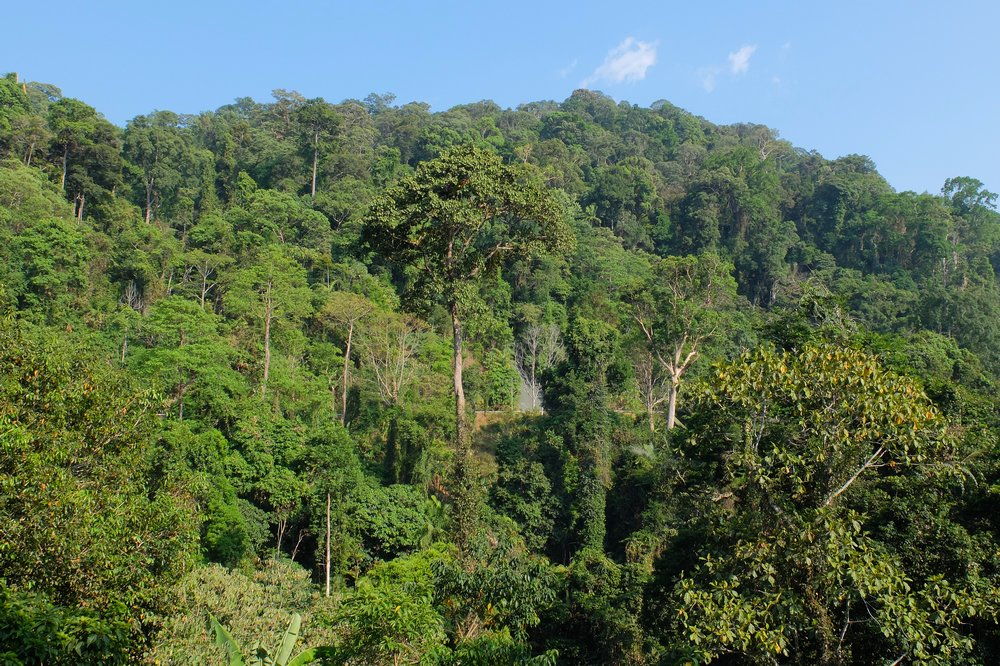 Jungle - Gunung Raya, Langkawi