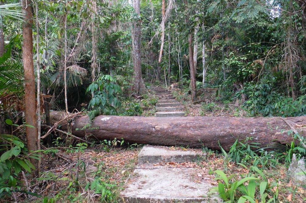 Hiking up Gunung Raya – highest mountain in Langkawi