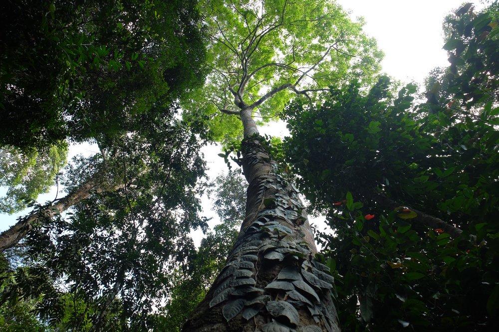 Hiking up Gunung Raya, Langkawi's highest peak