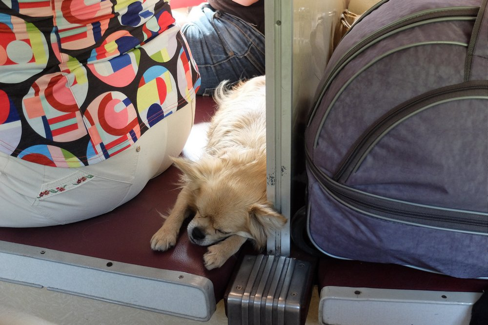 You can travel with your dog on train in Russia
