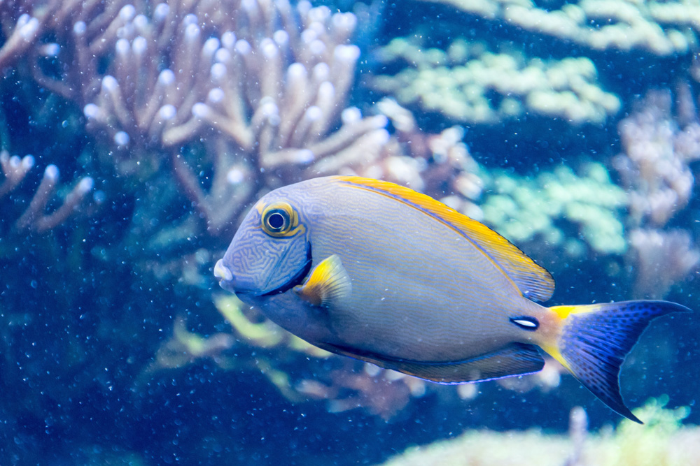 Fish in KLCC Aquaria - Best Places to Visit in Kuala Lumpur