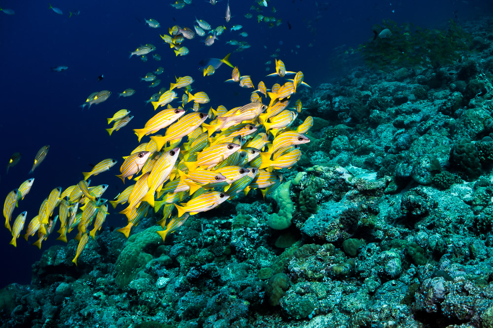 Colorful fish of Palau