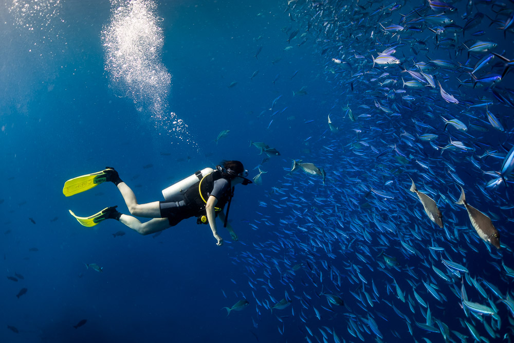 Diving in Palau - Things to Do in Palau