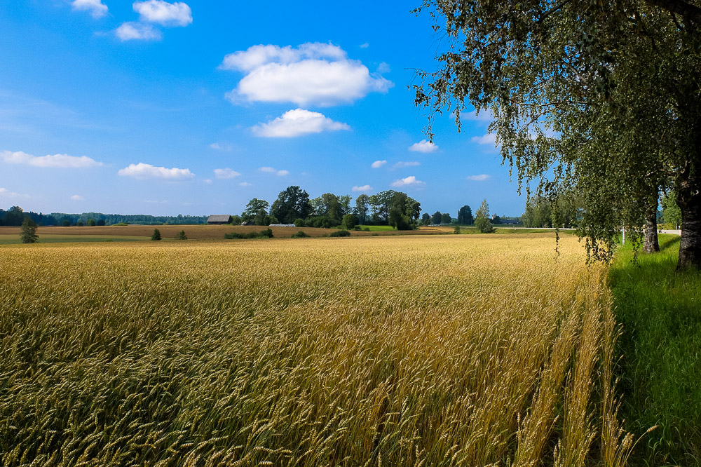 Field in Latvia