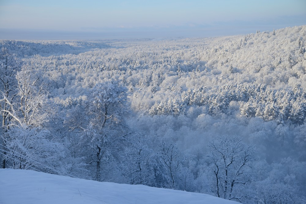 Forest near Sigulda during the winter - Top Things to Do in Latvia