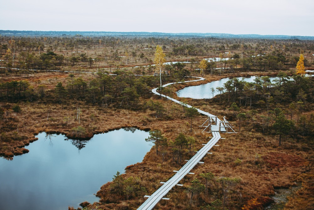 Swamp - Top Things to Do in Latvia