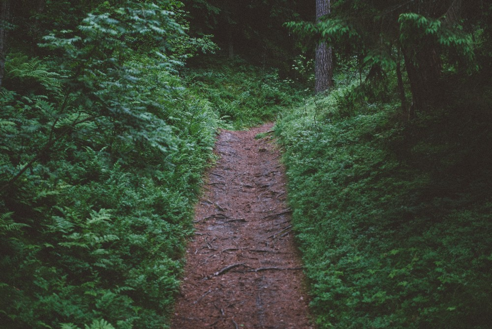 Trail in the forest - Top Things to Do in Latvia