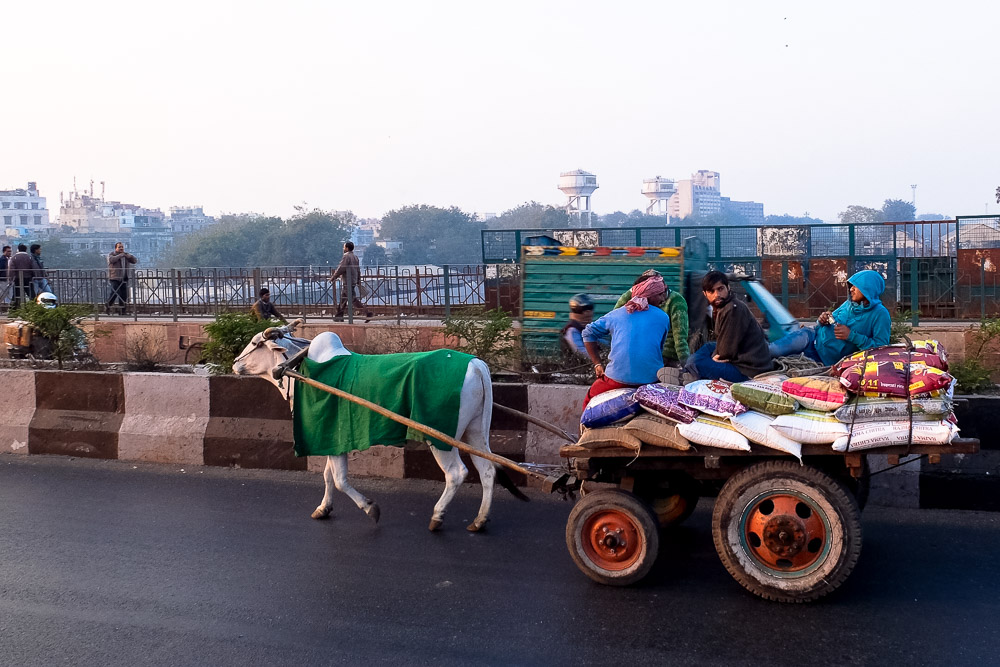 Cow carriage in Delhi, India - Best Books on India - Best Books on Asia