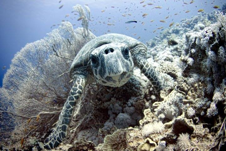 Turtle under water - Making Money While Traveling