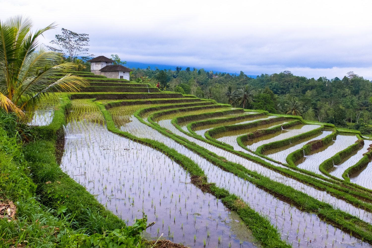 Bali rice terraces - Visa on Arrival in Indonesia