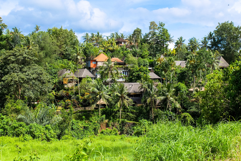 Houses amidst jungle in Ubud, Bali