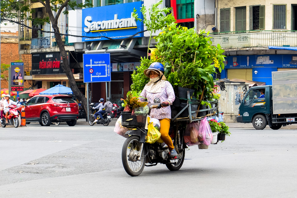 Carrying trees on a scooter - Vietnam Photo Story