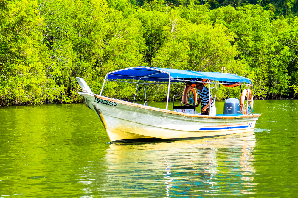 On a mangroove boat trip - Best Things to Do in Langkawi