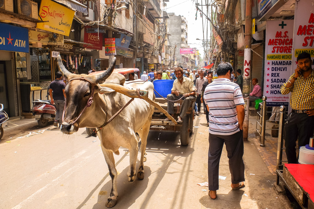 A buffalo in Old Delhi - 4 weeks in India