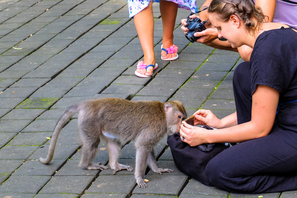 Monkey at Monkey Forest in Ubud, Bali - Best Things to Do in Bali