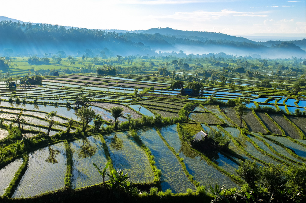 Rice terraces near moung Agung, Bali - Best Things to Do in Bali