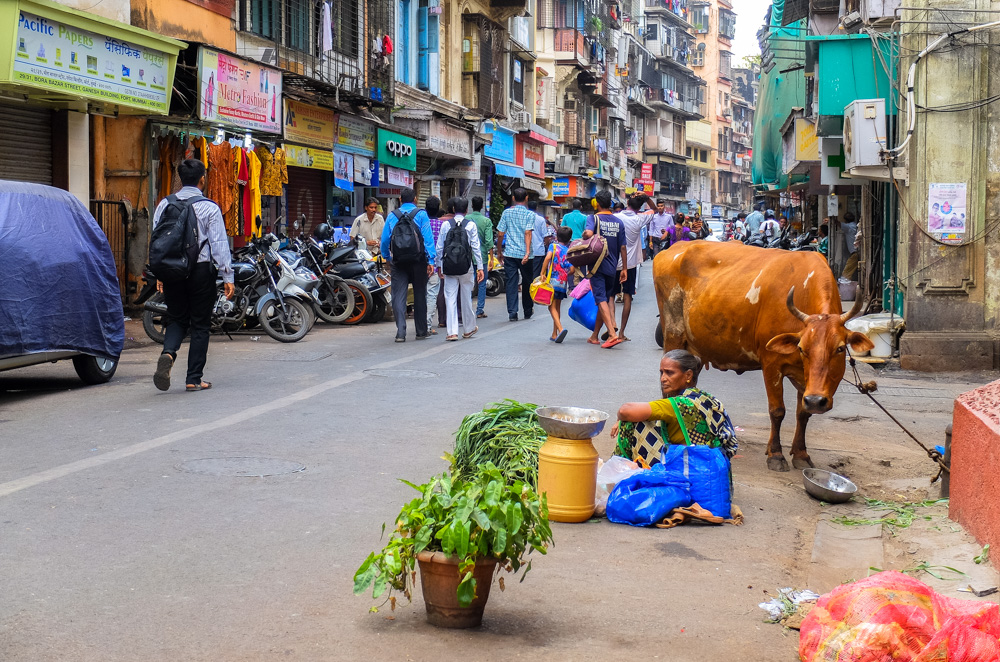 Woman and a cow in Mumbai - 4 Weeks in India