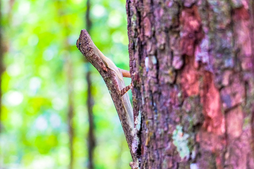 Lizard in Malaysia - Best Things to Do in Penang, Malaysia
