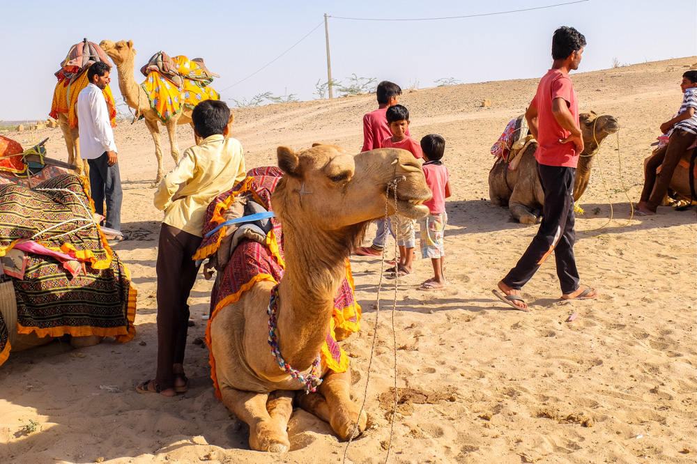 Camels and people - Our Jaisalmer Desert Safari Experience