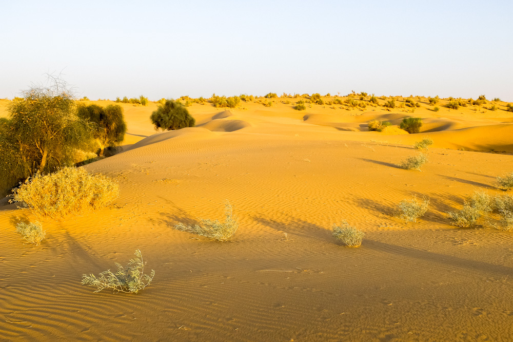 Desert near Jaisalmer - Our Jaisalmer Desert Safari Experience