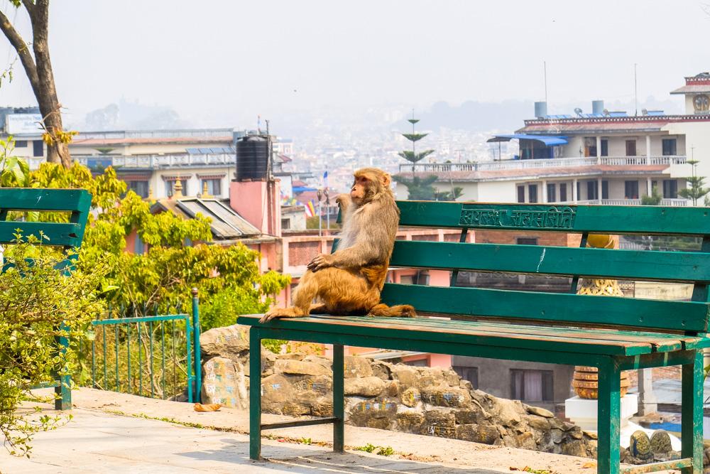 A monkey at Swayambhunath Stupa, Monkey Temple - Kathmandu, Nepal