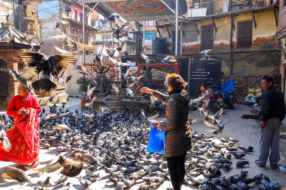 People feeding pidgeons in Kathmandu