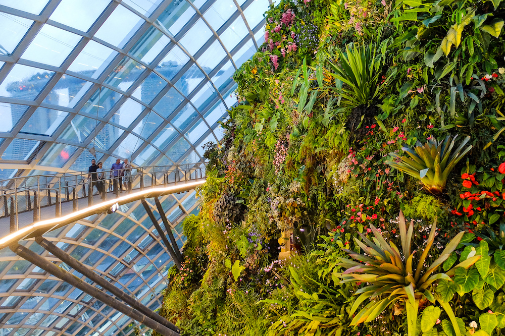 Cloud Forest, in Gardens by the Bay, Singapore