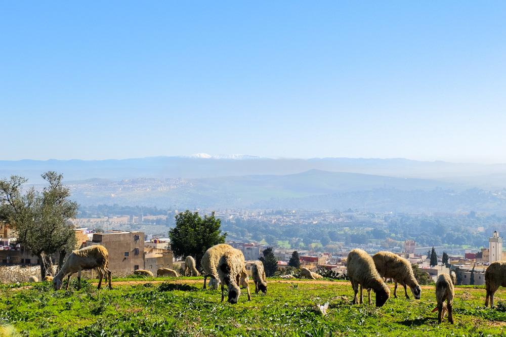 A hill near Fez